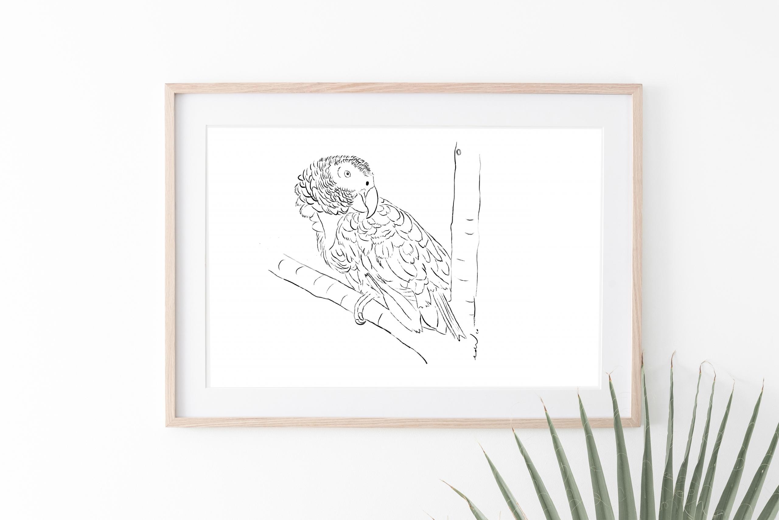 Persoonlijke tekening papegaai
